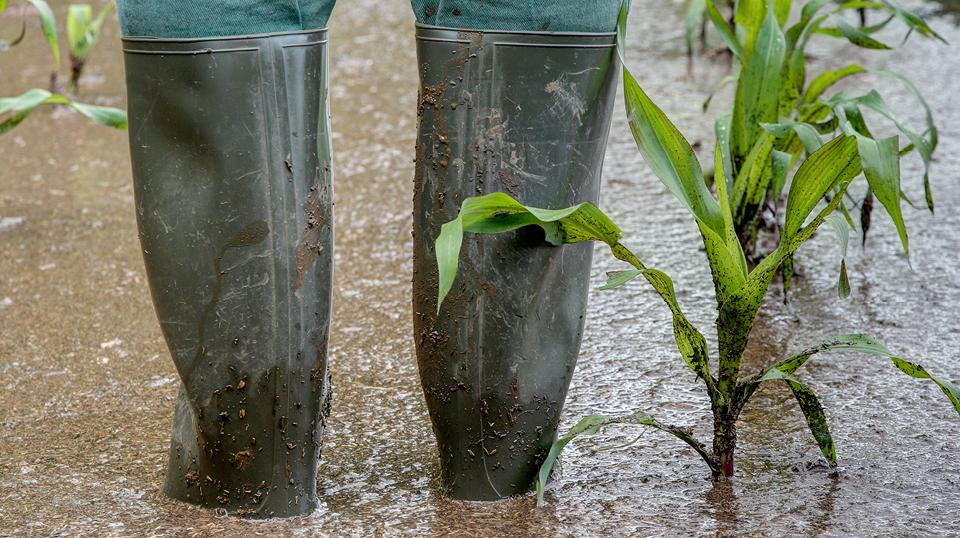 Katastrophe, Land- und Forstwirtschaft: Steuerliche Maßnahmen zur Hochwasserkatastrophe 2021